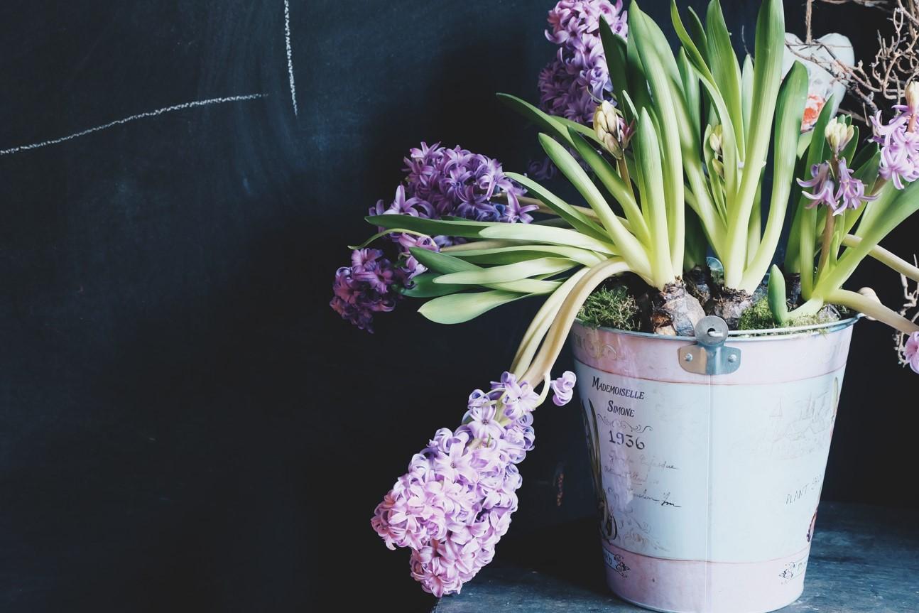 Rumuńska firma poszukuje dostawców akcesoriów florystycznych