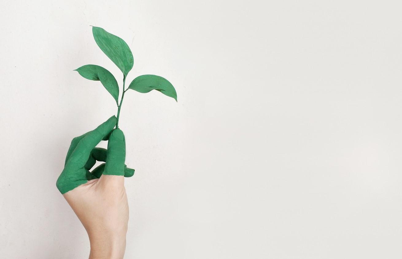 Poszukiwane rozwiązania w zakresie płytek z odpadów biodegradowalnych